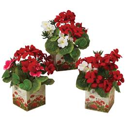 Geraniums in Designed Metal Can