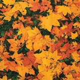 Autumn Leaves Patterned Paper