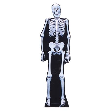 Skeleton Stand-Up